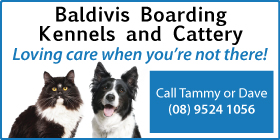 *Baldivis Boarding Kennels and Cattery - Cattery Baldivis